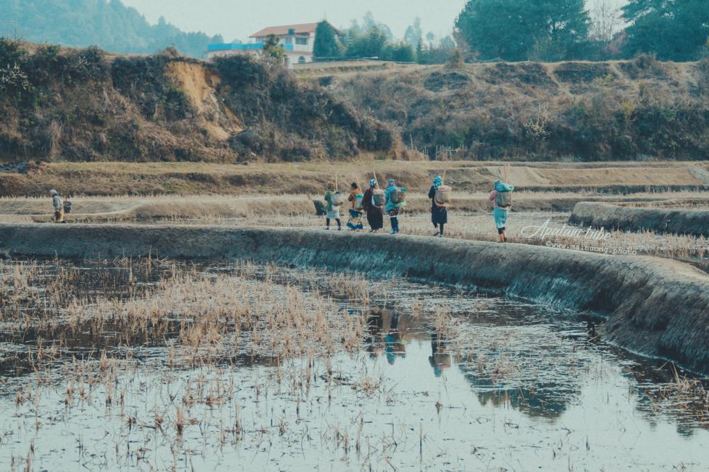 Người Apatani đã tạo ra các phương pháp nông nghiệp hữu hiệu và bền vững.