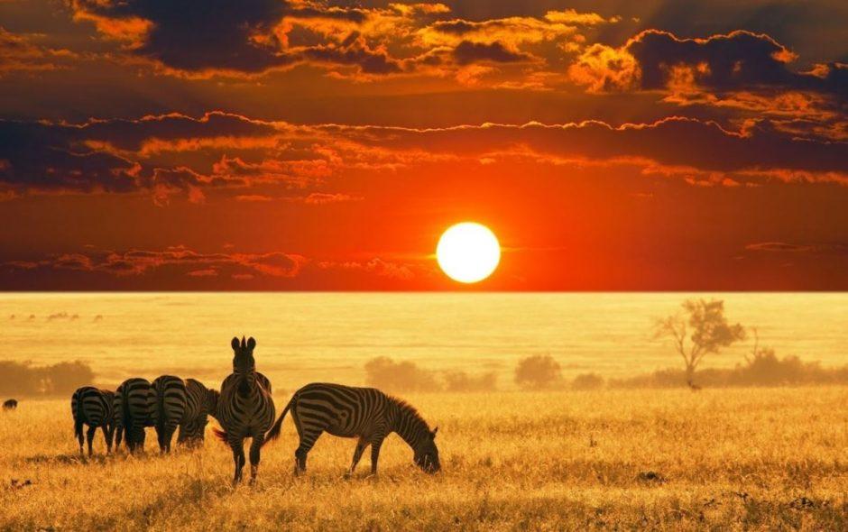 Giấc mơ về Kenya hoang dã…(tất cả thông tin cần cho chuyến đi Kenya sắp tới)